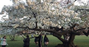 What a beautiful flower tree